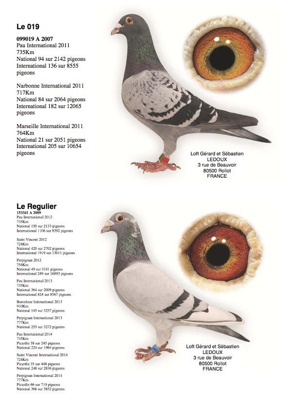 Colombier LEDOUX : Le 019 et Le Regulier